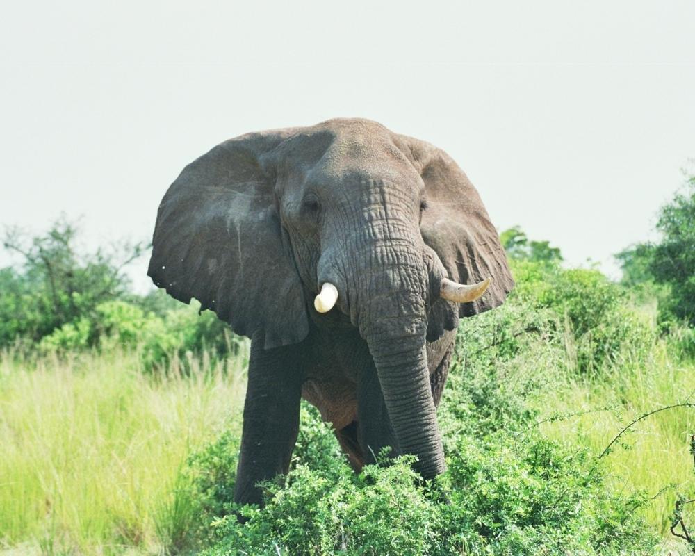 Murchison Falls National park Uganda safari