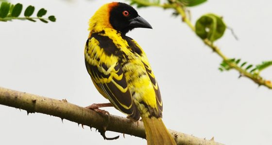 birding-tours-in-Uganda