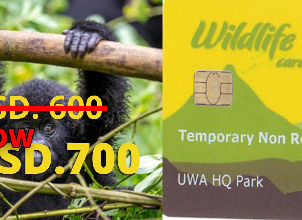 Uganda gorilla permits increases from 600 to 700$