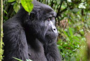 10 Days Gorilla Trekking & Wildlife Safari