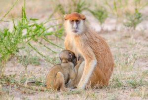 Best safari activities to look out for in 2020 - Uganda safaris